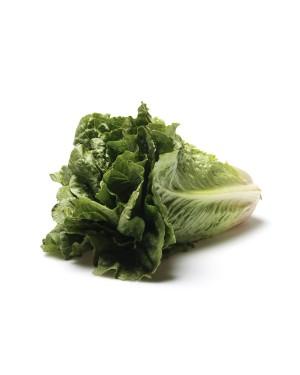 Romaine Lettuce Organic