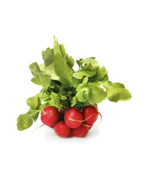 Red Radish Bundle ORGANIC